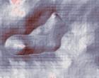 ginecologia 2005